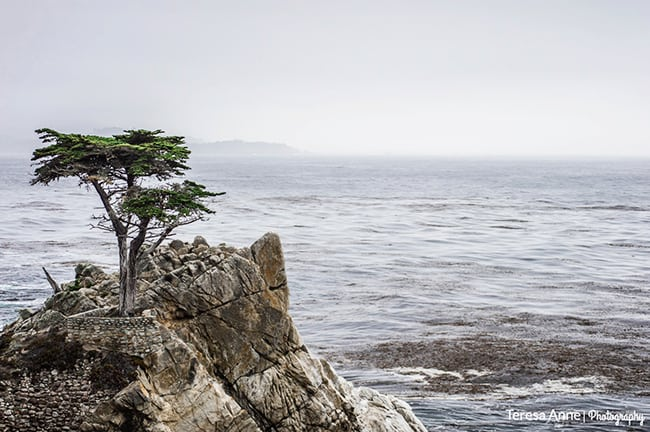 The day we left, Chris and I drove up to Monterey to do the 17 Mile Drive.  We've done this once before, and the weather was the same...foggy.  So disappointing!  But it made for some great pictures of the Lone Cyprus!